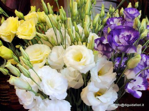 fiori recisi nomi help fiori ci sono a settembre prima delle