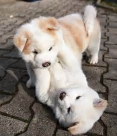 Small Dogs Free To Home Barnsley The 25 Best Puppies Ideas On
