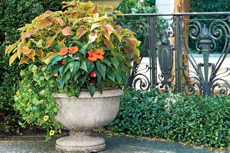 container gardens for florida spectacular container gardening ideas southern living