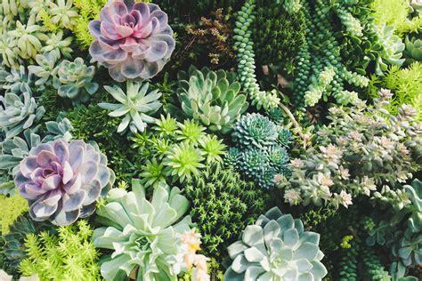 jardines verticales tips  conseguir  bonito espacio