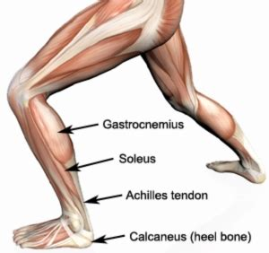 sore legs and after standing strained calf calf strain calf strain