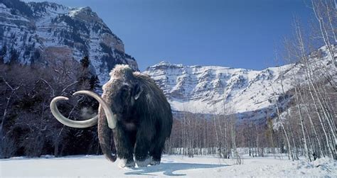 wooly mammoth ice age the world before god created it