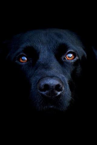 descargar imagenes terrorificas gratis darmowe na telefon darmowe tapety zwierzęta 320x480