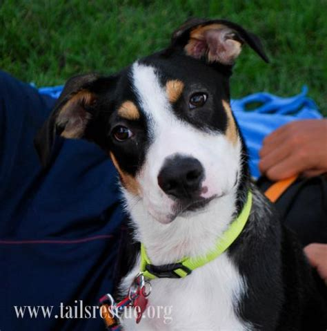 adopt happy tails rescue happy tails rescue