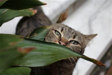 katzen entfernen garten katzen fernhalten katzen artgerecht vom garten fernhalten