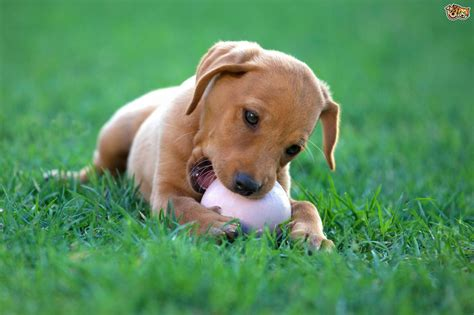 playful puppy playful breeds of dogs pets4homes