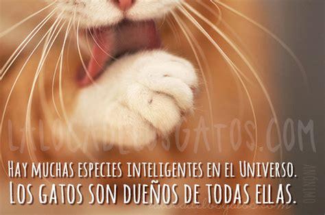 imagenes de gatitos inteligentes citas y frases c 233 lebres sobre gatos especies la loca de