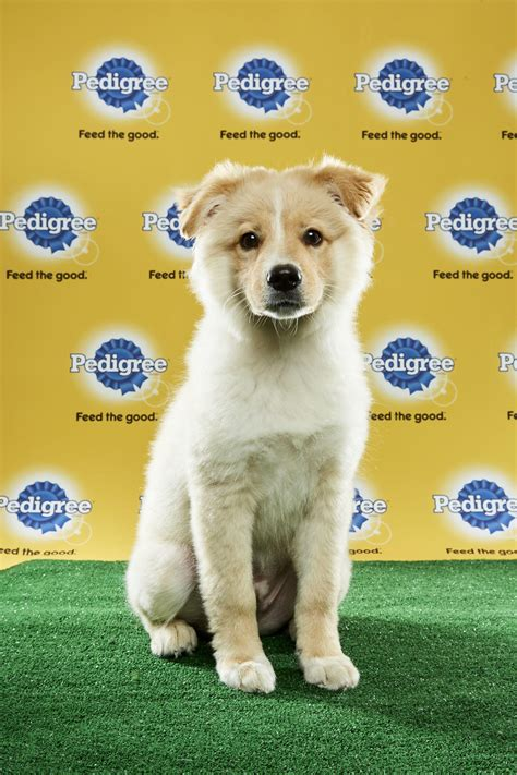 puppy bowl 2017 highlights all the best highlights from puppy bowl xiii cuteness
