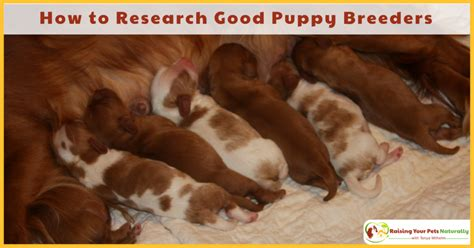 questions to ask when buying a puppy questions to ask a breeder archives raising your pets naturally with tonya wilhelm