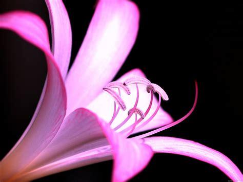 Blume Mit Weißer Blüte by Die 69 Besten Blume Hintergrundbilder