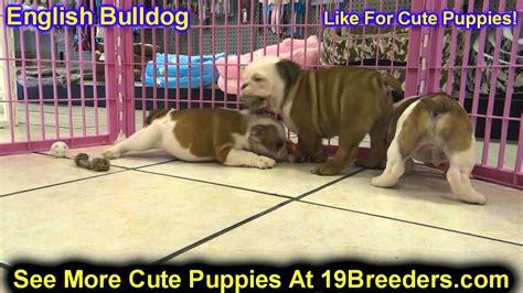 puppies for sale in cheyenne wy bulldog puppies for sale in cheyenne wyoming wy casper laramie