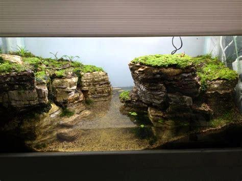 terrarium len 112 best images about aquarium frog reptile ideas on