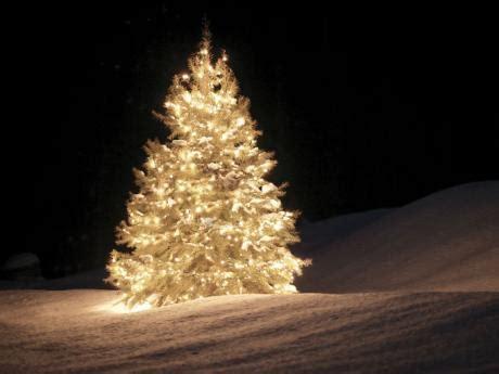 arboles de navidad con nieve alejandro hern 225 ndez y eckstein la navidad blanca de azucena fragmento