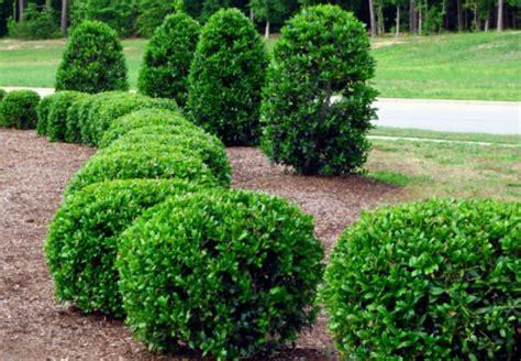 top 28 trim bushes pruning lawn pro bush trimming