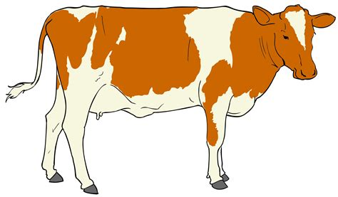clipart image cattle clipart clipart panda free clipart images