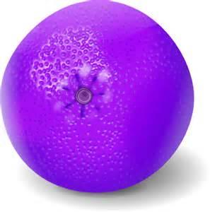 Purple orange fruit orange fruit vector clip art
