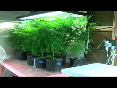 growers house marijuana grow house in stuart youtube
