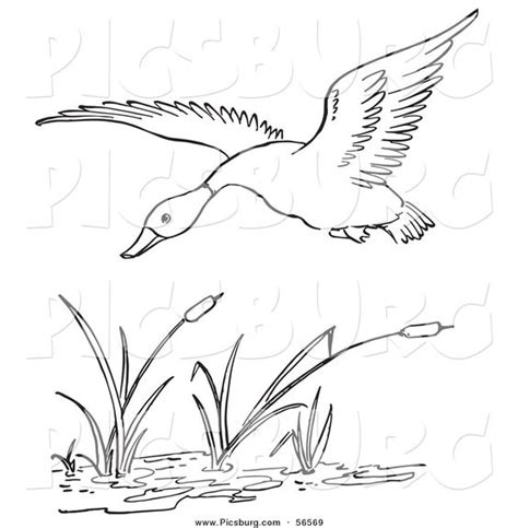 coloring pages ducks in a pond printable black and white art clip art of a duck flying