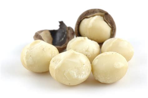 are nuts for dogs macadamia nuts and dogs macadamia nuts toxic to dogs