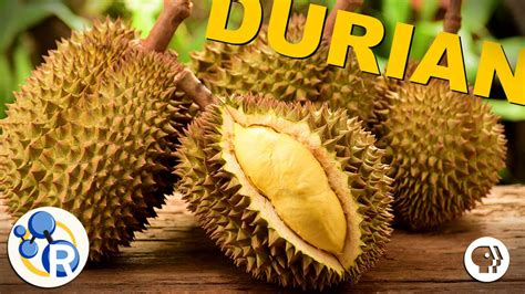 does concolor fir smell like oranges why durian is the smelly king of fruits