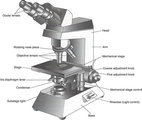 what is a compound light microscope imagequiz compound light microscope parts