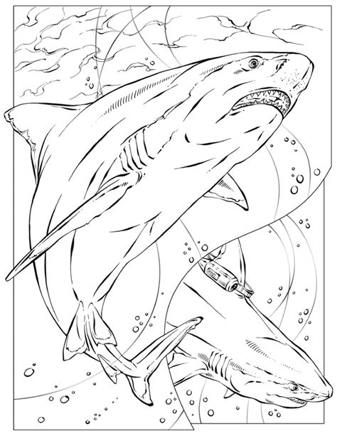 National Geographic Az Coloring Pages National Geographic Coloring Pages