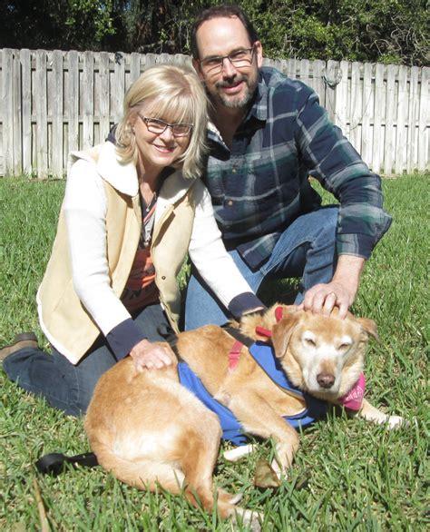 golden retriever rescue league oprah is adopted golden retriever rescue of mid florida