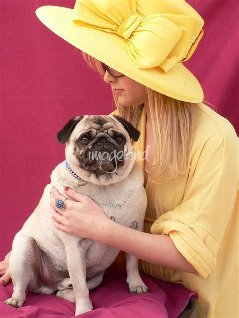 pug fashion stunning quot pug quot artwork for sale on prints