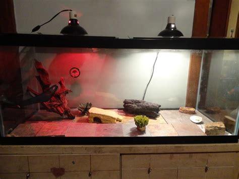 bearded dragon heat l 75 gallon bearded dragon org