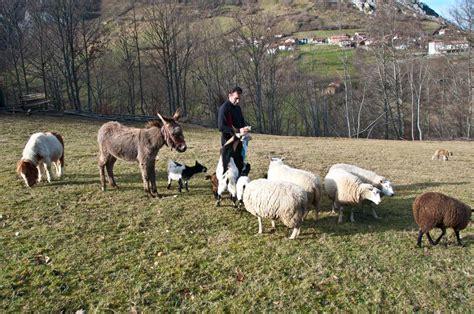 imagenes animales de granja fotos de animales domesticos animales de granja tattoo