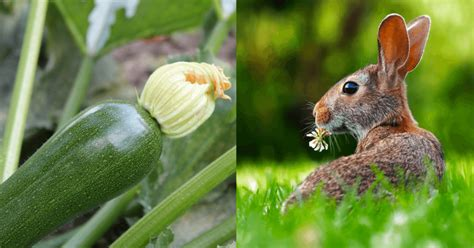 vegetables bunnies can eat can rabbits eat zucchini