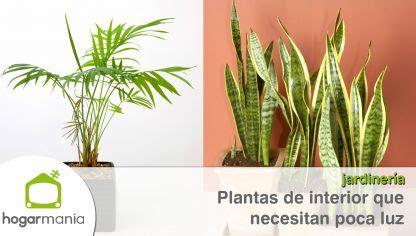plantas de interior poca luz plantas de interior que resisten con poca luz hogarmania