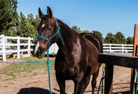 Horse Tack Giveaway 2017 - pony pering spa day for my horses budget equestrian
