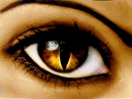 gold eye wallpaper cat s eye 3d and cg abstract background wallpapers on