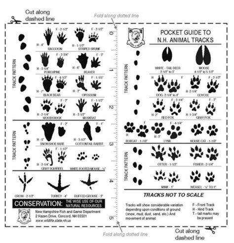 printable animal tracks identification printable animal tracks guide quotes