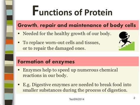 2 protein functions sec 3 f n proteins part 1 nutrients and health