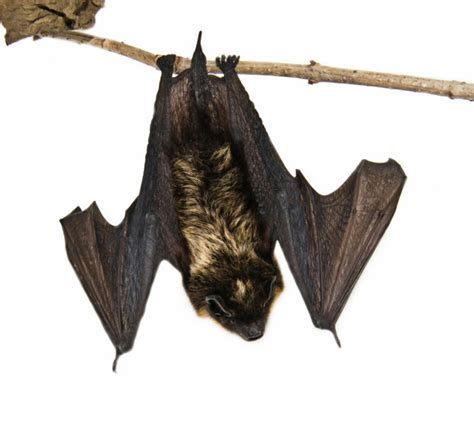 keep bats out of your home yes pest pros inc