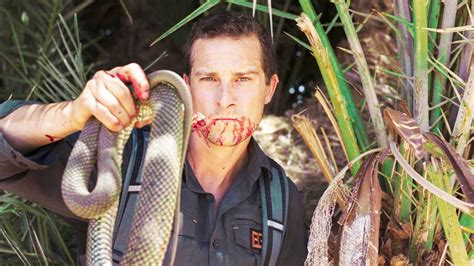 Bears Grills by Top 10 Grylls Moments