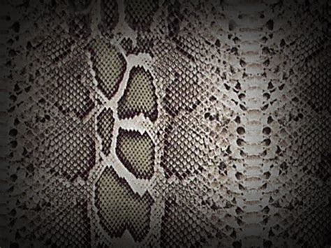 pattern photoshop snake snake skin scale texture reptile pattern images