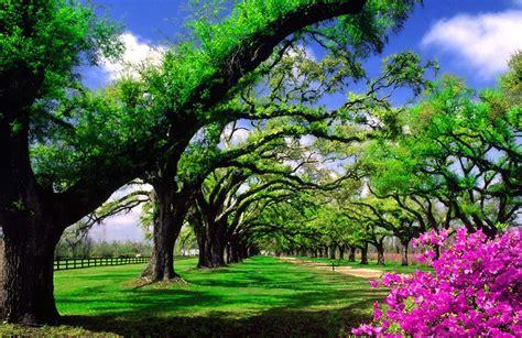 jardines y paisajes paisaje jardin jardines decorados paisajes plantas y