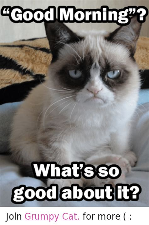 Good Meme Grumpy Cat - 25 best memes about cats good morning and grumpy cat