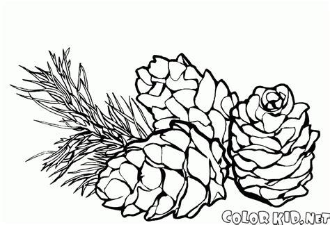 Pine Cone Coloring Page coloring page pine cones