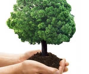 rights of plants trees in islam tawheedmovement com
