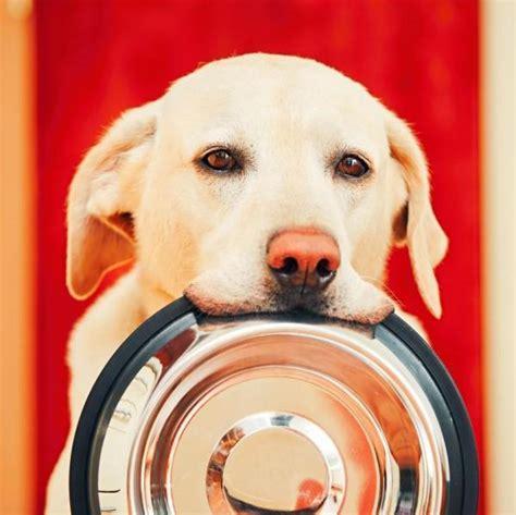 alimentazione e diarrea dieta per cani con diarrea