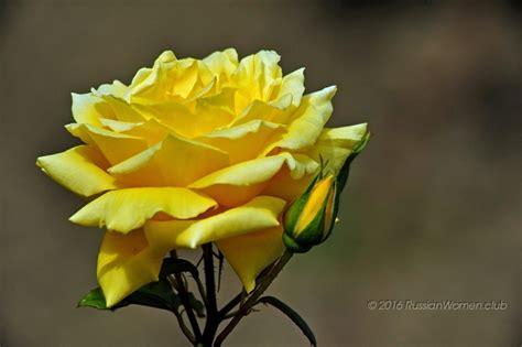 sfondi fiori per cellulari sfondi gratuiti per cellulari fiori sfondi sfondi