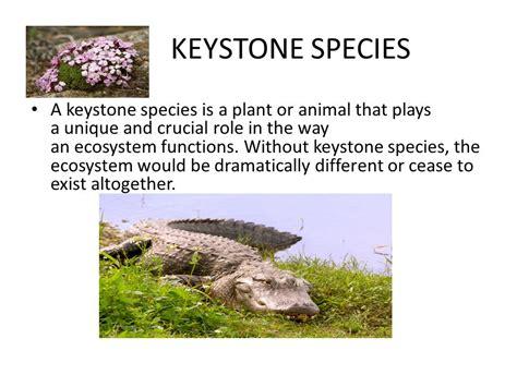 keystone species a keystone species is a plant or animal