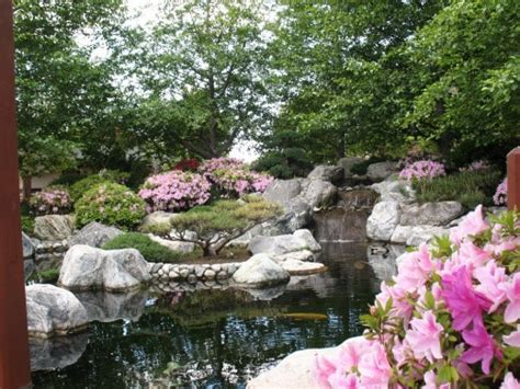 San Diego Pond And Garden by Tranquility Blooms At The Japanese Friendship Garden