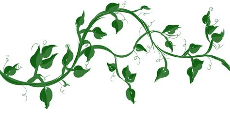 Vine Search Vine With Maple Like Leaves Drawing Zoeken Vines Leaf Drawing