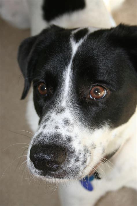 breed i 10 reasons i chose a mutt a purebred big bark loudlydream big bark