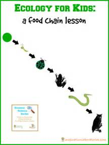 Food chain for kids